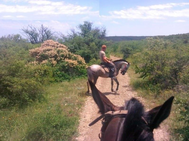 Фото: Прогулки на лошадях для новичков