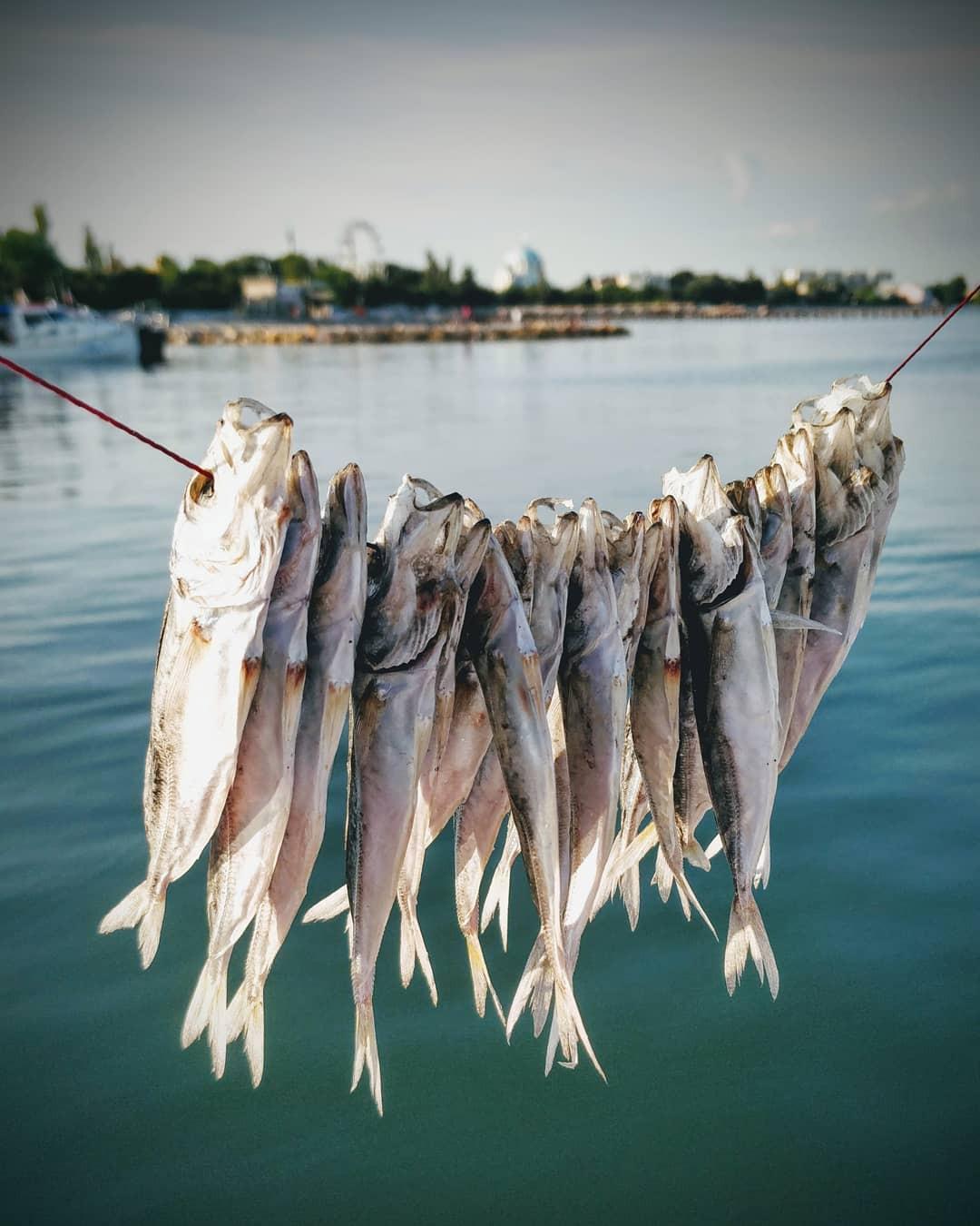 Фото: Рыбалка на парусной яхте