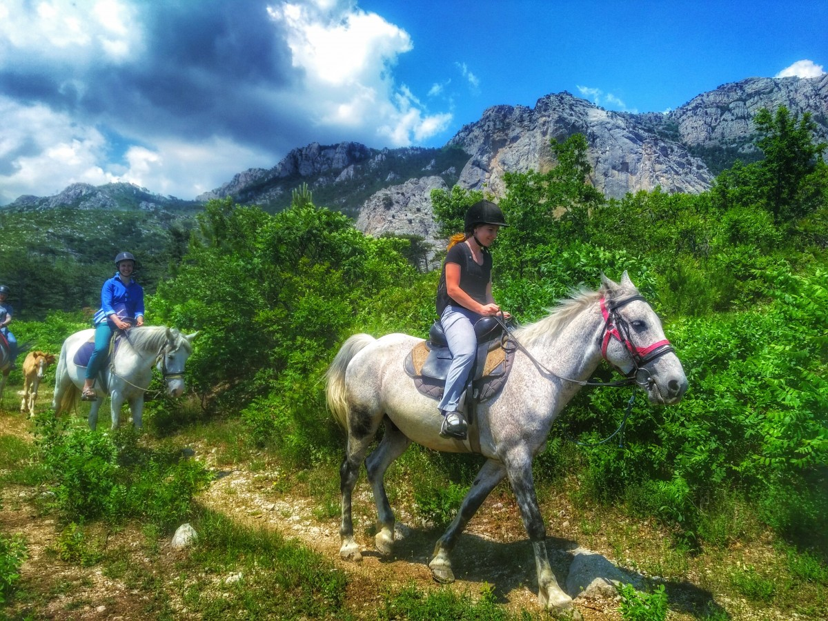 конные прогулки в крыму xcourse.me
