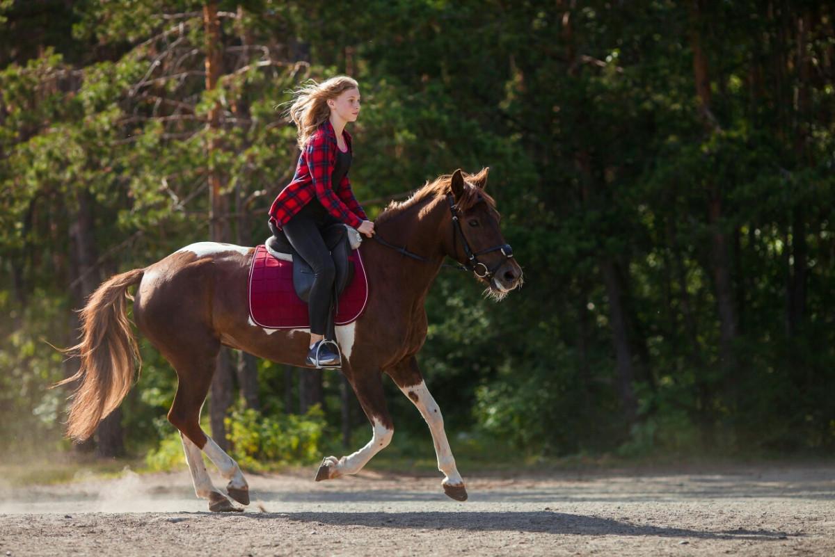 Фото: Конные прогулки по лесу в Челябинске