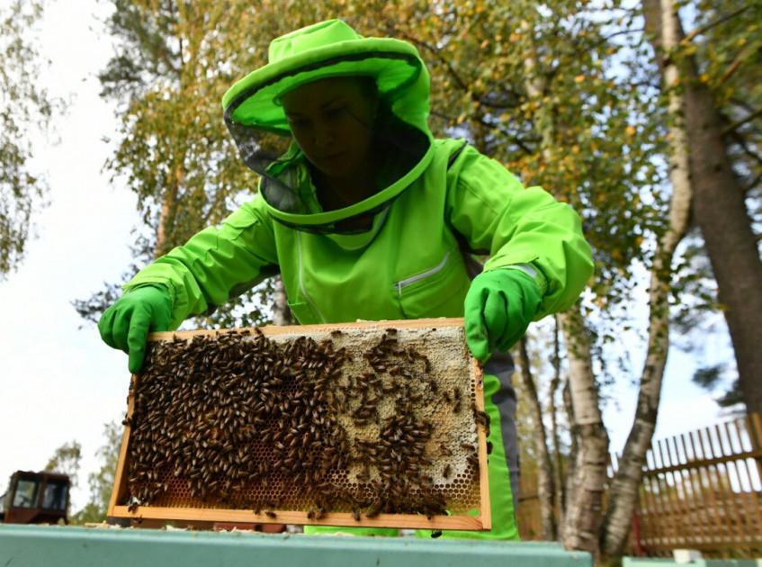 Фото: В гостях у карельского пчеловода