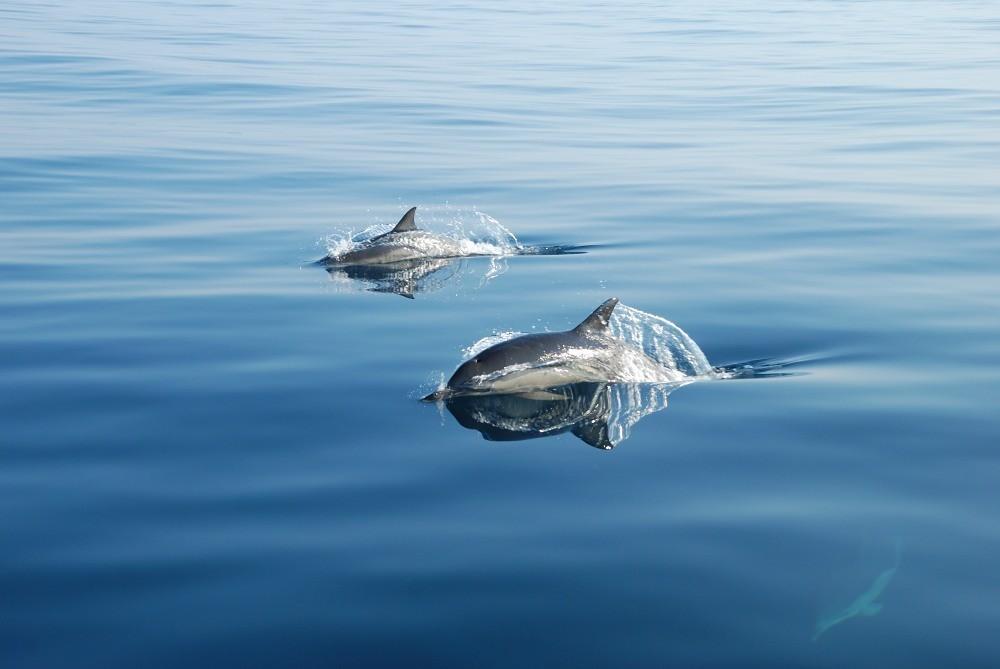 Фото: Прогулка с дельфинами на SUP досках