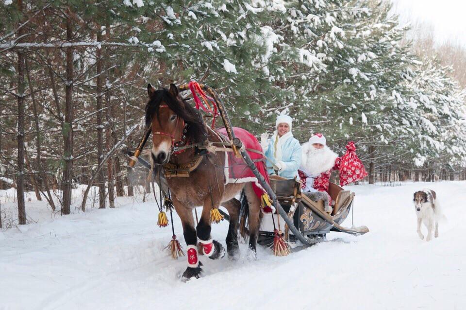 Фото: Катание на санях в Новосибирске