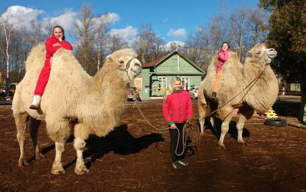 Фото: Катание на верблюдах