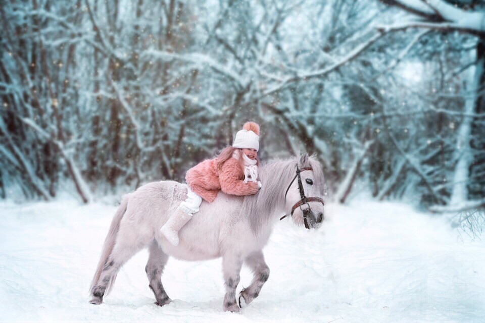 Фото: Катание на лошадях и пони по бору