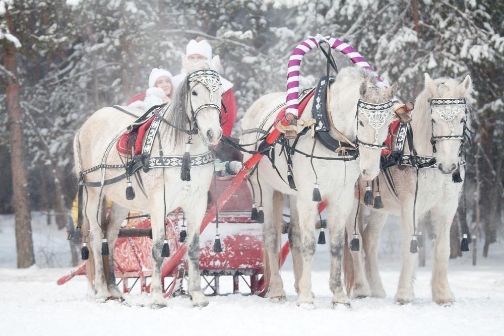 """Фото: Новогодняя программа """"В гостях у лошадок"""""""