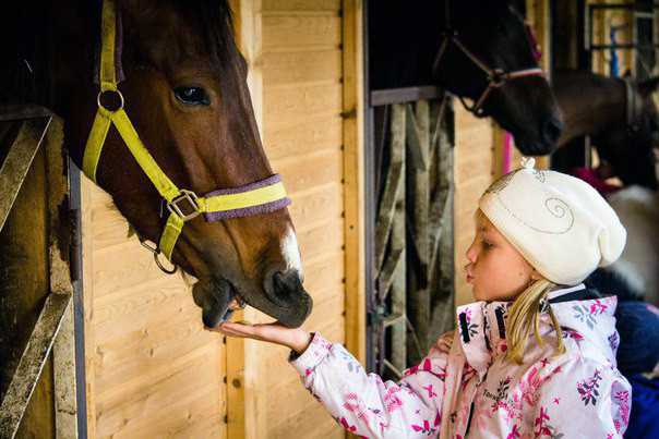 Фото: Экскурсия по конюшне с мастер-классом