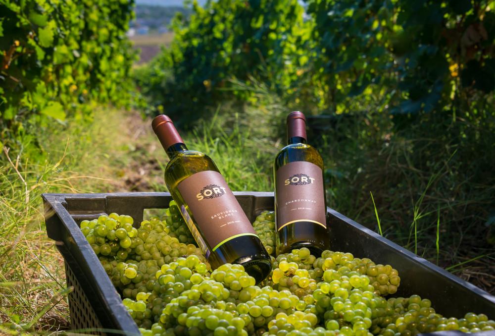 Фото: Экскурсия на виноградники с дегустацией