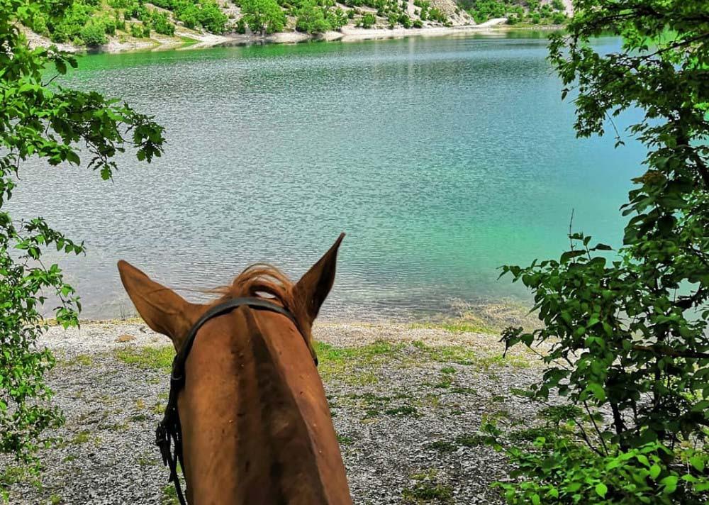 Фото: Купание с лошадьми в лимане Сасык-Сваш