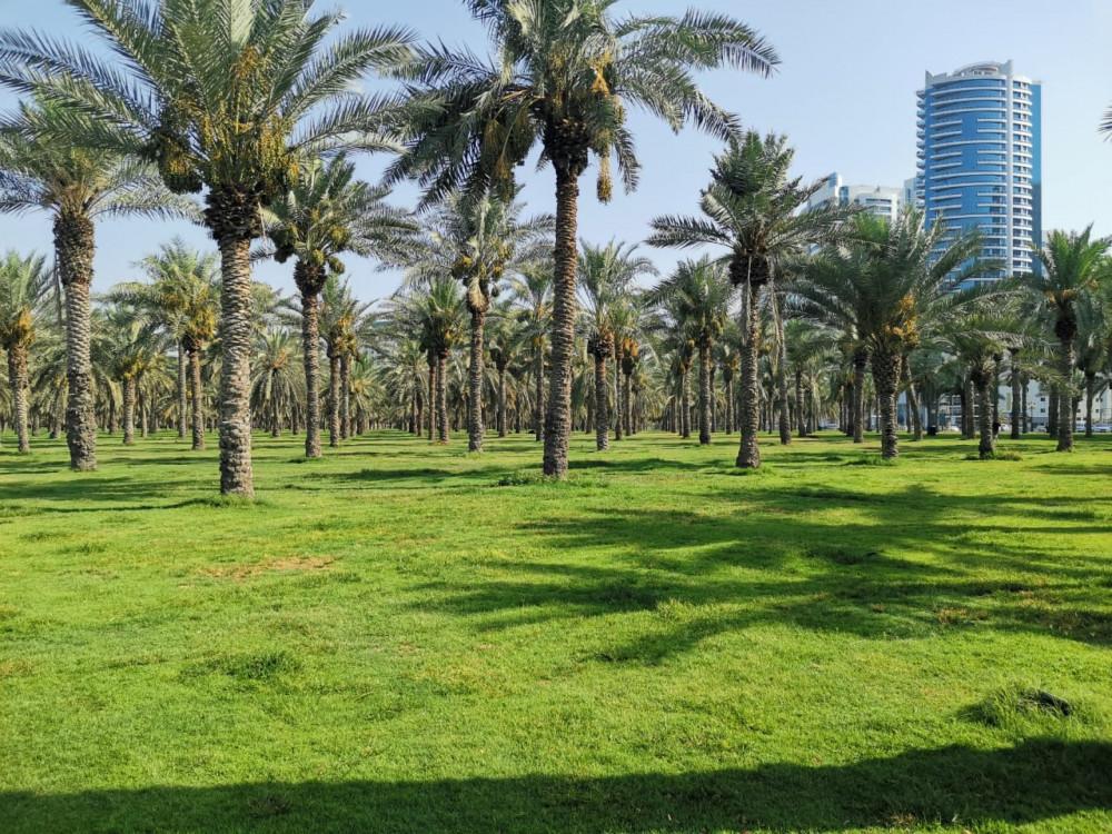 Фото: Колоритные 5 Эмиратов