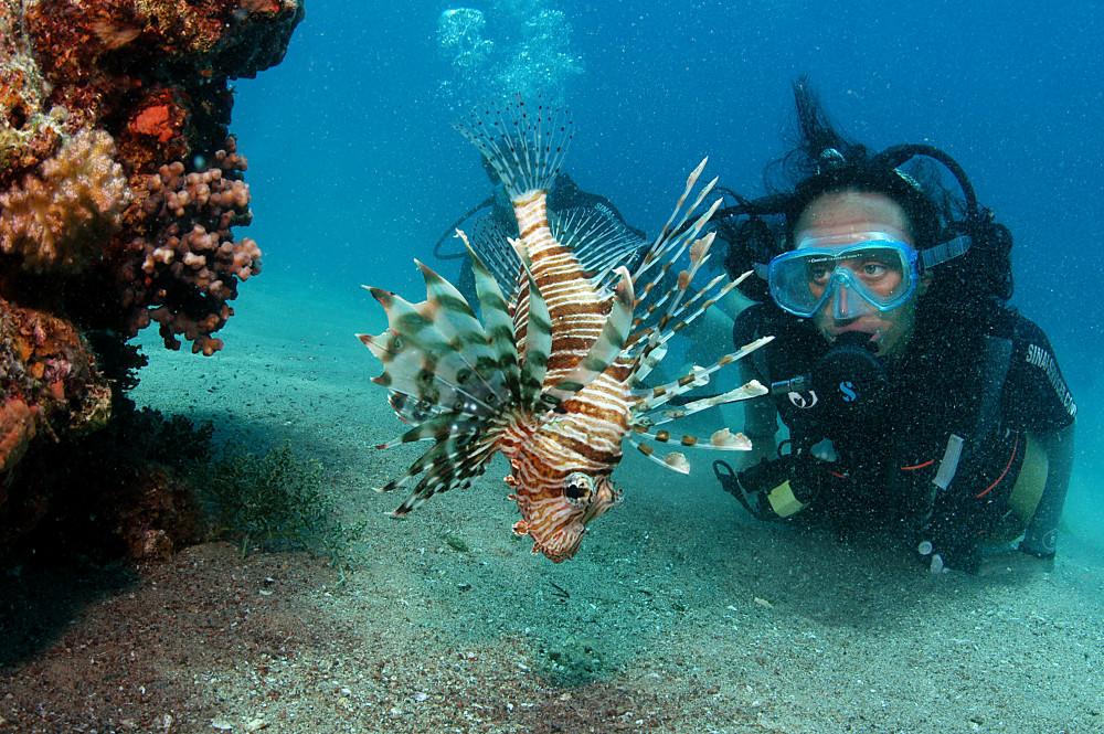 Фото: Начальный курс PADI Open Water Diver