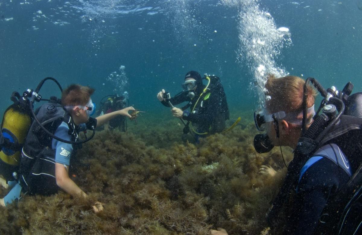 Фото: Погружение с аквалангом (Дайвинг)