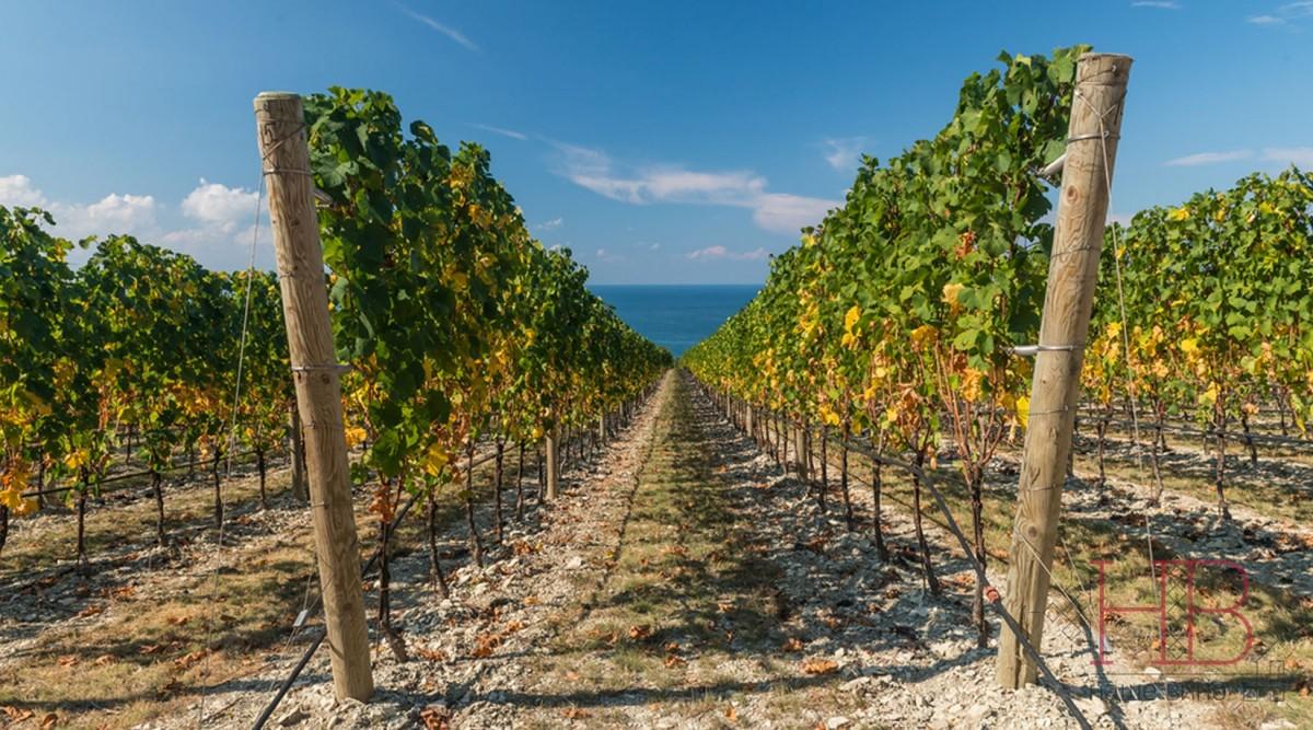 Фото: Третье море - море вина