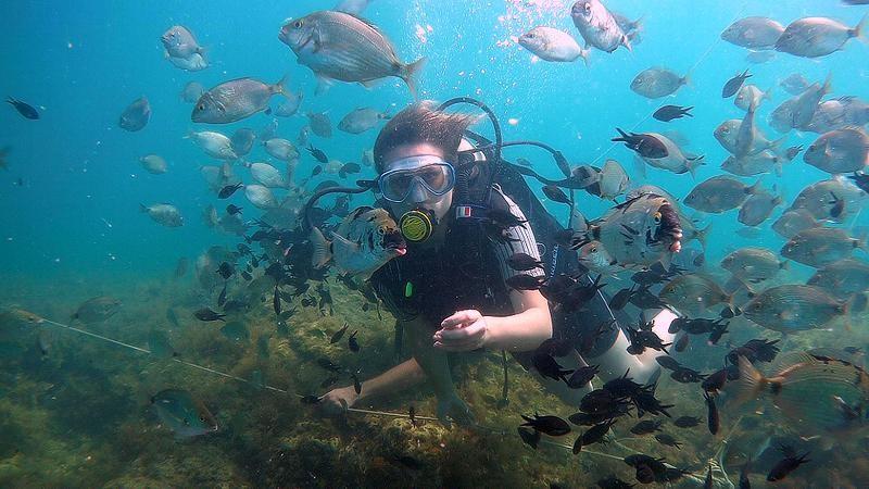 Фото: Дайвинг в Геленджике с кормлением рыб
