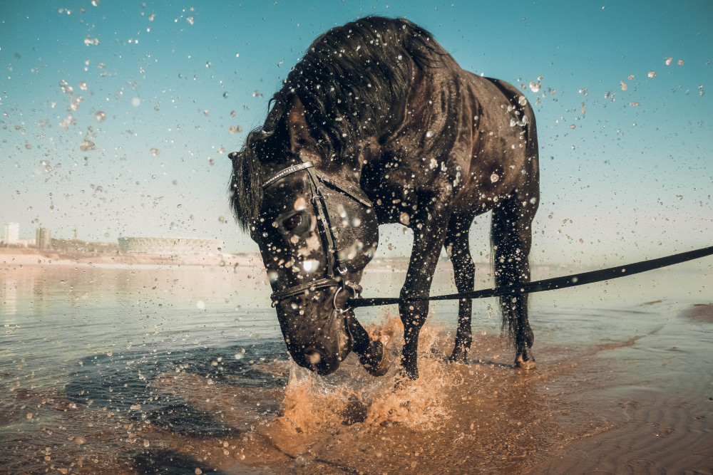 Конные прогулки в Волгограде