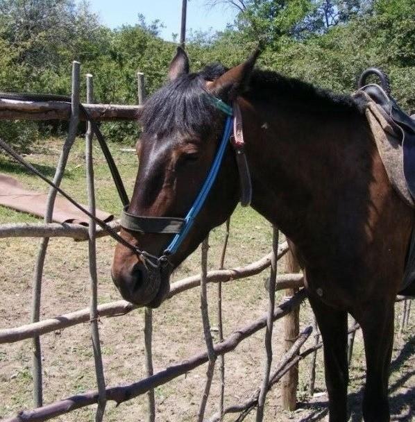 Конные прогулки в Феодосии