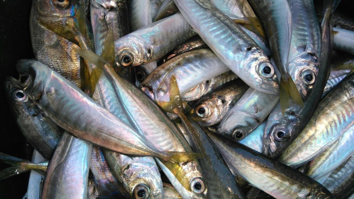 Рыбалка в Анапе на море