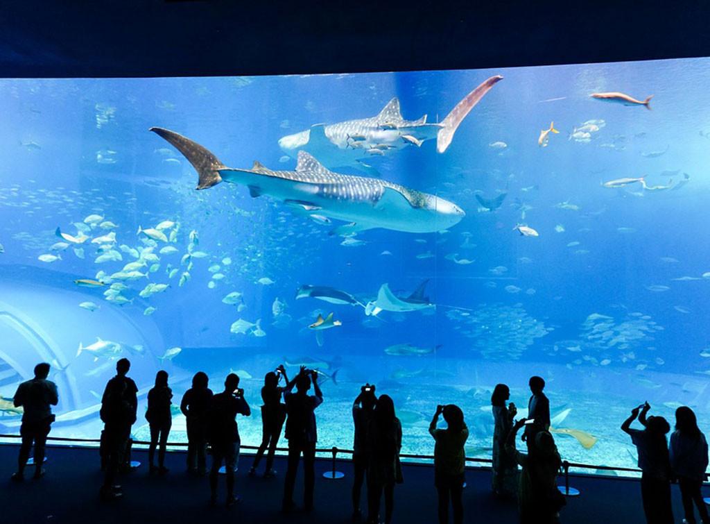 Фото: Краснодарский океанариум Оcean Park