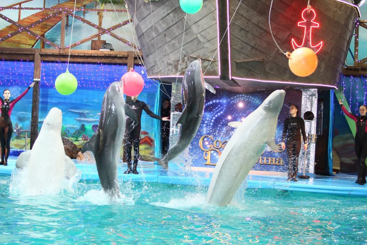 Фото: Ярославский дельфинарий